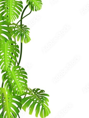 tropikalne-zielone-liscie-na-bialym-tle