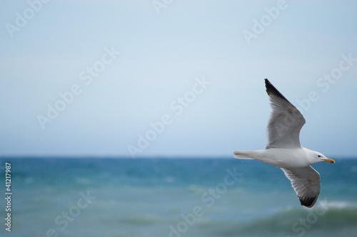 Fotografie, Obraz  Gabbiano in volo sul mar Ligure