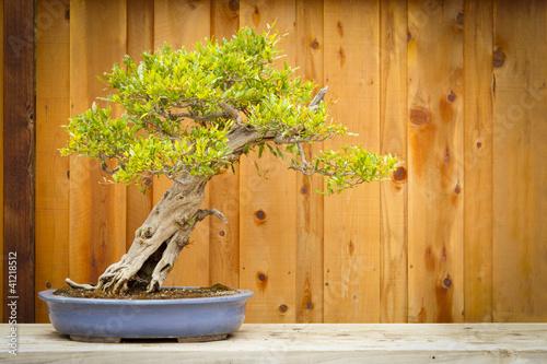 Bonsai Pomegranate Bonsai Tree Against Wood Fence