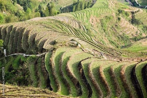 Foto auf Gartenposter Reisfelder terraced fields scenery