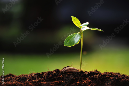Photo  Green sprout growing from seed