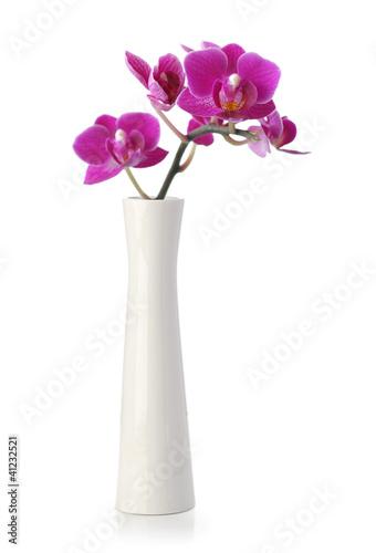 Fotografie, Obraz  Pink Orchid flower in white vase