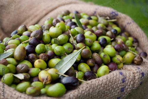 Fotografie, Obraz  olive italiane