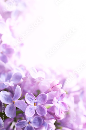 Tuinposter Lilac Art Spring lilac abstract background