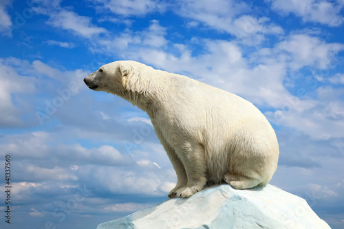 Cadres-photo bureau Ours Blanc polar bear