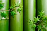 Bambusy obok siebie