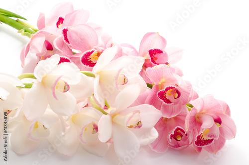 白と紫のシンビジウムの花