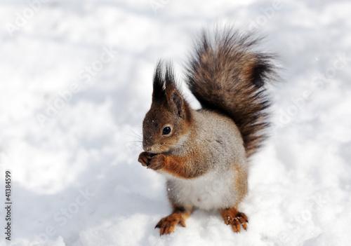 Tuinposter Eekhoorn squirrel eats