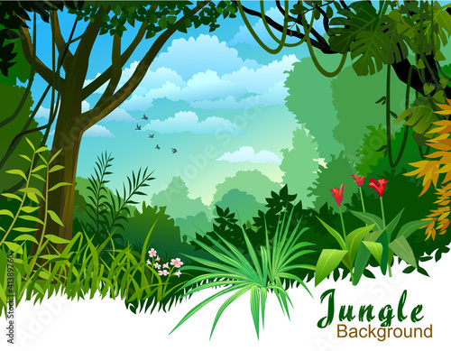 Fotografie, Obraz  AMAZON JUNGLE TREES AND WILDERNESS