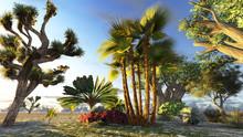 Traveller's Tree (ravenala Madagascariensis)