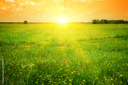 Foto op Aluminium Weide, Moeras Beautiful sunset on a spring field