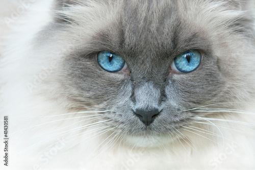 Foto op Aluminium Kat A cat named Elvis