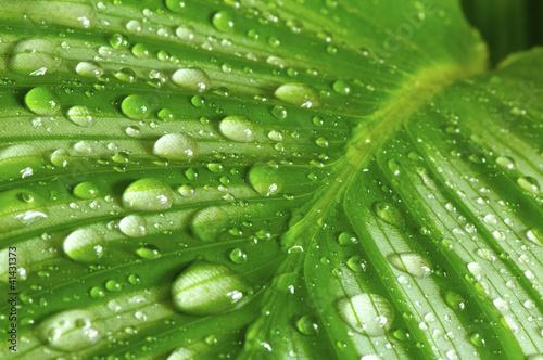 Fototapety One Color   poranna-kropla-na-zielonych-lisciach