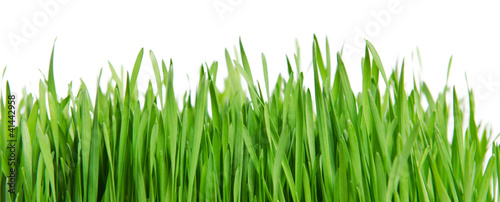 Photo  Isolated green grass on white background