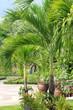 Королевский ботанический сад в Бангкоке