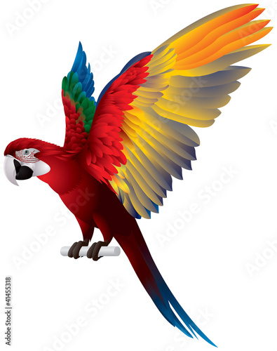 Photo Parrot Spread Wings