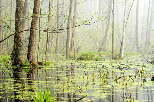 Fotografia swamp in fog at the sunrise