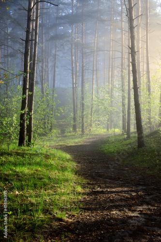 Fototapeta las mgla-w-lesie