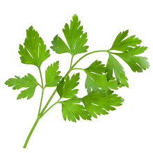 Bunch Of Parsley Isolated On W...
