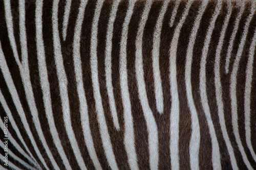 Aluminium Prints Zebra Zebra stripe background