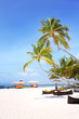 Coconut trees and beach couches with blue sky