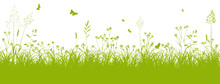 Blumenwiese, Gras, Wiese, Grün, Feldwiese, Sommer, Frühling