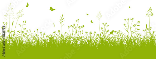 Obraz Blumenwiese, Gras, Wiese, Grün, Feldwiese, Sommer, Frühling - fototapety do salonu