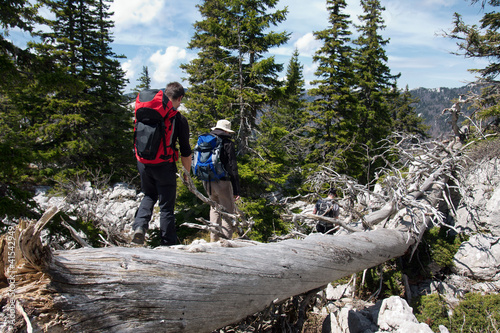 Fotografie, Obraz  two mountaineers and the old tree trunk