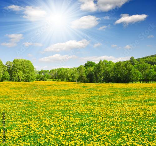 Photo Stands Melon Spring landscape in the national park Sumava - Czech Republic