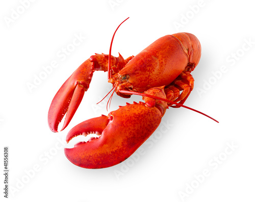 Stampa su Tela Isolated lobster on white