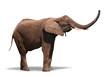 Joyful Elephant Isolated on White