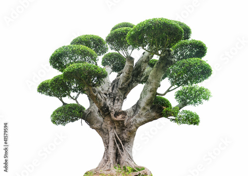 Spoed Foto op Canvas Bonsai tree isolated on a white background