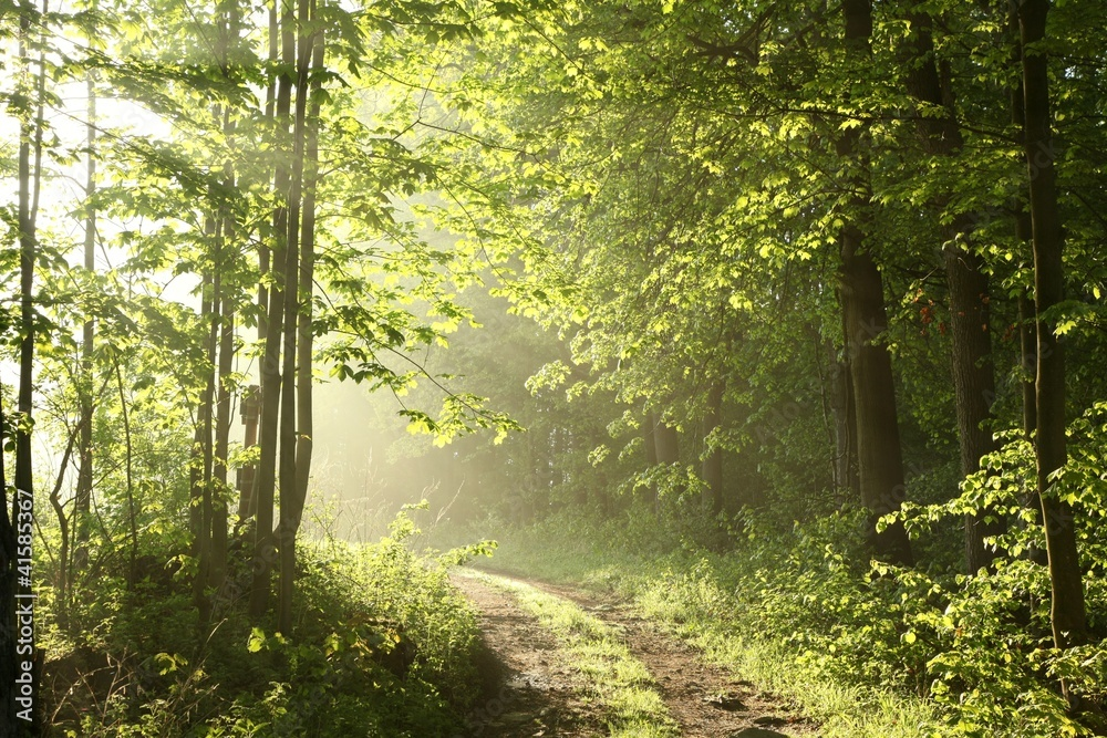 Forest path on a sunny May morning