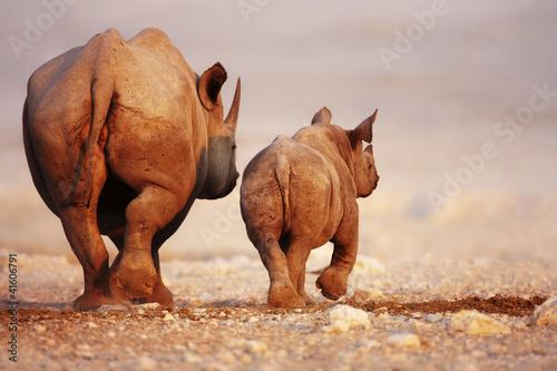 Spoed Foto op Canvas Neushoorn Black Rhinoceros baby and cow