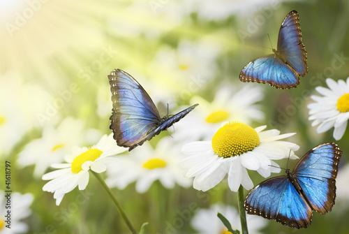 prato fiorito con farfalle blu Canvas Print