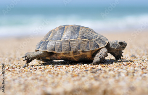 Poster Tortue tropical, tropical fish, turkey,