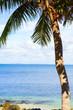 sea and coconut tree