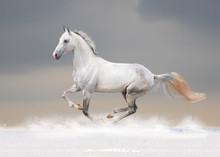 White Horse In Winter Field