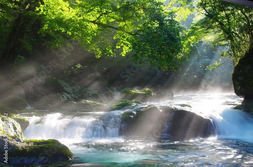 Fotografie, Obraz  原生林と渓流と光芒 Virgin forest and shaft beam of light