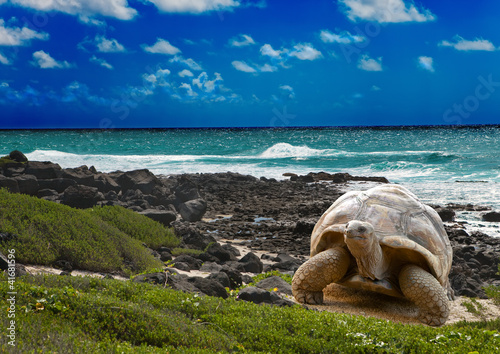 Poster Schildpad Large turtle at the sea edge on background of tropical landscape