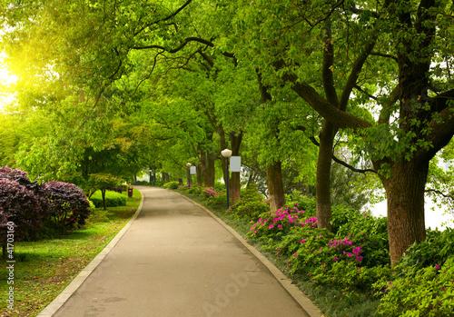 letnia-droga-parkowa