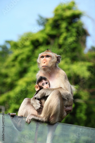 In de dag Aap Monkey (Long-Tailed Macaque) with her sweet baby.