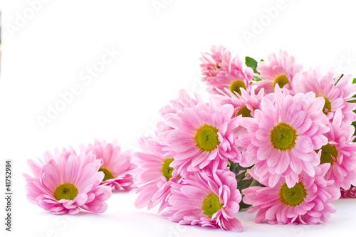 Tableau sur Toile chrysanthemum flowers