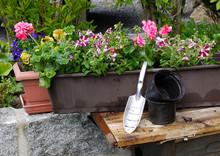 Pflanzen Garten Blumenkästen