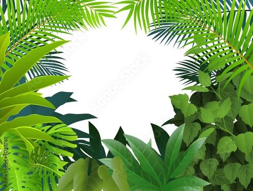 Fotografie, Obraz  Tropical forest background