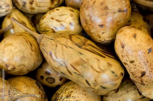 Keuken foto achterwand Baobab Polierte Baobabfrüchte - Affenbrotbaum