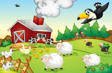 Prizor farme