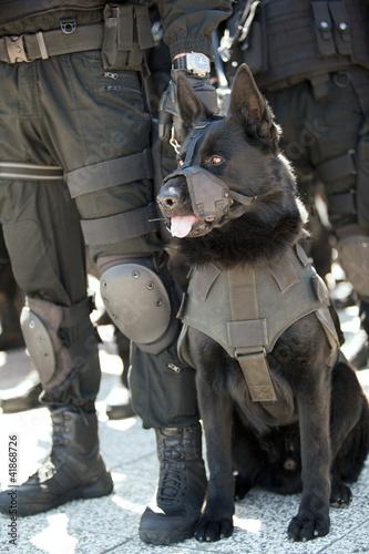 Vászonkép police dog