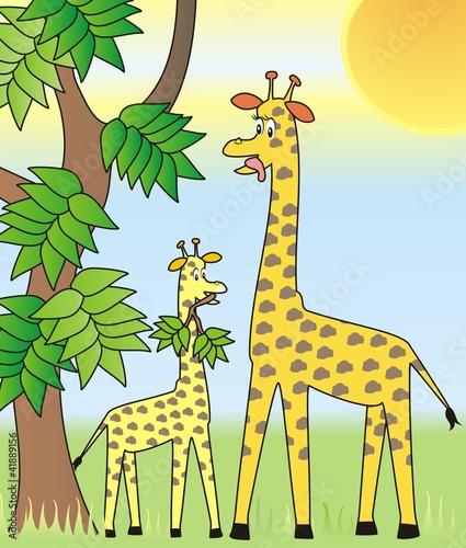 Foto op Aluminium Zoo two giraffes