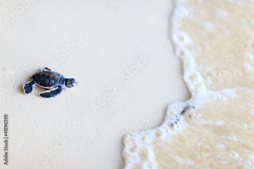 In de dag Schildpad Baby green turtle
